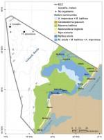Сообщества макрозообентоса от литорали до изобаты 70мв Юго-Восточной Балтике