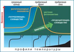 Схема формирования высокой биологической продукциив зоне гидрофизического фронта