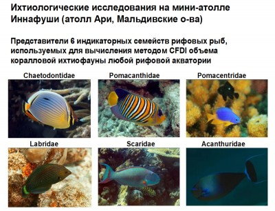 Ихтиологические исследования на мини-атолле Иннафуши